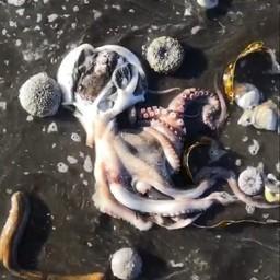 Обстоятельства гибели морских обитателей на юге Камчатки выясняются. Кадры из видео kristy_rozenberg