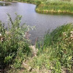 Трагедия произошла на берегу пруда Осиновского. Фото пресс-службы Следственного управления СК России по Саратовской области