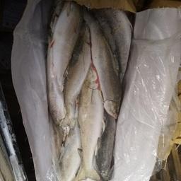 В порту Санкт-Петербурга проверили дальневосточную рыбную продукцию, прибывшую Северным морским путем. Фото пресс-службы Россельхознадзора