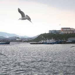 Кунашир – хорошее место для переработки свежей рыбы